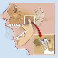 Voice tips 101 whats wrong with your face gala choruses blog notice in the diagram where the joint is located and that the jaw is on a hinge joint it should open kind of like a cabinet dooron a hinge ccuart Gallery